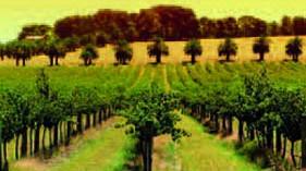 Expertos consideran que la innovación es un factor clave para abrir mercados exteriores al vino