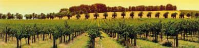 Tecnovino-encuentro-viticultura-precision