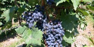 Ponencia en Fenavin sobre las aplicaciones de los gases en el sector vitivinícola