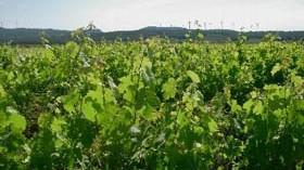 Grial Negre 2011, un vino ecológico con medalla de bronce en los premios Decanter