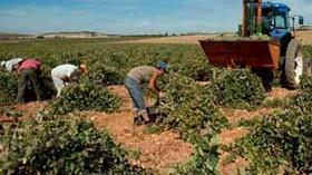 Se espera una cosecha de uva buena y de calidad en Castilla-La Mancha