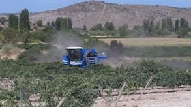 """La añada 2012 se califica como """"Buena"""" por parte del Consejo Regulador de la DOP Vinos de Madrid"""