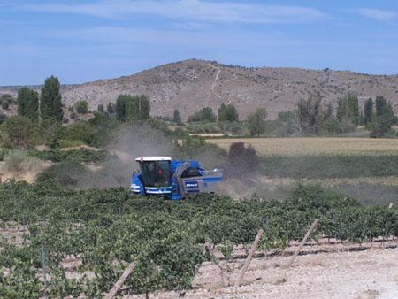 Tecnovino-vinos-de-madrid-calificacion-añada-2012