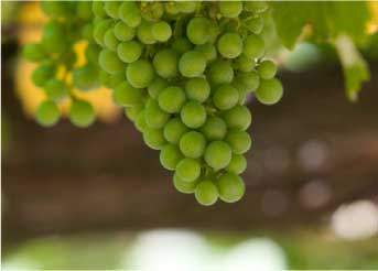Tecnovino-Martin-Codax-jornada-vitivinicultura