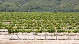 Empresas desarrollarán un sistema para monitorizar los viñedos y la uva