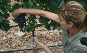 Tecnovino DOCa Rioja maduracion uva 2013