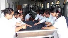 Los alumnos de Enología de la Universidad de Cádiz elaboran vinos en sus prácticas