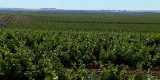 Aprobados 154 proyectos para promocionar los vinos de Castilla y León en nuevos mercados