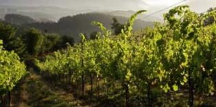 La influencia del suelo sobre la calidad del vino estudiada por Neiker y la Cámara de Agricultura de la Dordoña