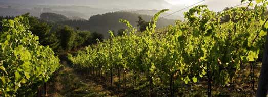 Tecnovino suelo viñedo vino Neiker txakoli Araba