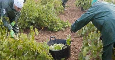 Tecnovino Cooperativas Agroalimentarias Castilla La Mancha vendimia 2013
