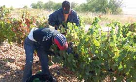 Tecnovino Do Cigales vendimia 2013