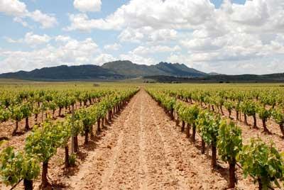 Tecnovino uva vinificacion Murcia subida produccion 2013