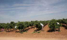 Tecnovino vendimia Castilla La Mancha