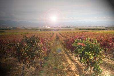 Tecnovino DO Navarra vendimia 2013