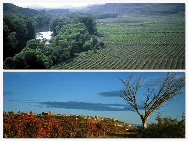 Tecnovino paisaje cultural del vino patrimonio de la Humanidad