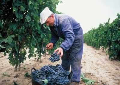 Tecnovino vendimia de Rioja 2013