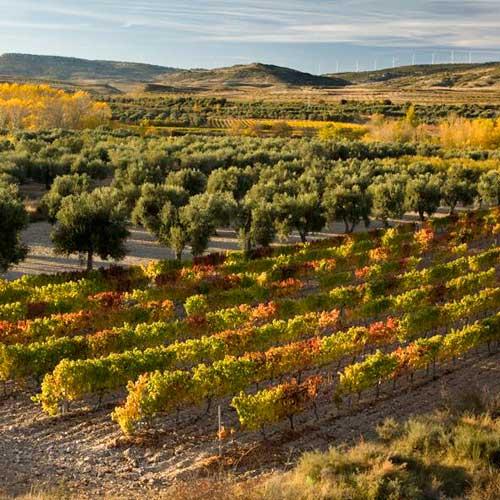 Tecnovino Asociacion para la Promocion del vino de garnacha