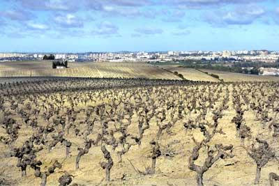 Tecnovino Jerez Ciudad Europea del Vino