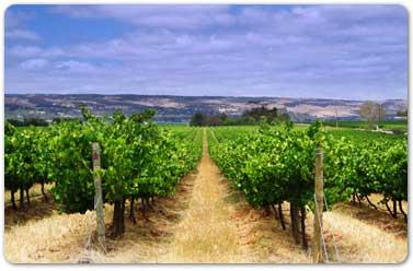 Tecnovino curso geoestadistica SIG viticultura