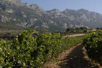 Tecnovino vino San Valentin Ruta del Vino de Rioja Alavesa Quintas