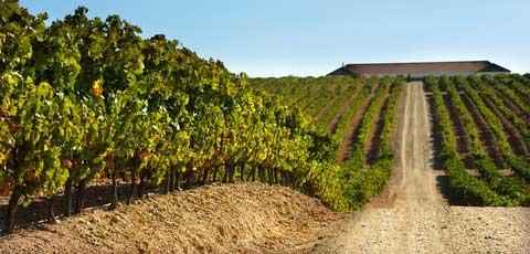 Tecnovino rutas del vino mas accesibles Predif