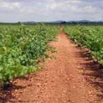 La sección de Vinos Dcoop-Baco crece con dos cooperativas más