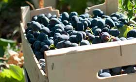 Tecnovino Fega vino y mosto produccion 2013 2014 vendimia