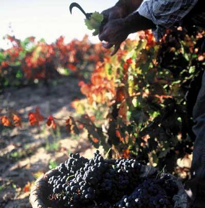 Tecnovino cosecha de Rioja 2013 calificacion