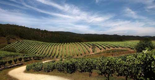 Tecnovino Acevin rutas del vino de Alicante y Campo de Carinena