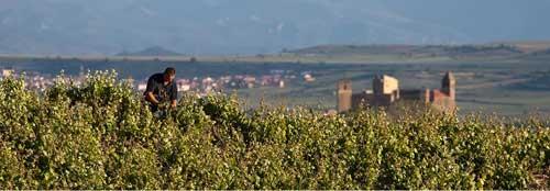 Tecnovino GWC becas de enoturismo Rioja