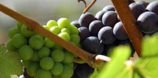 Magrama y el sector del vino continúan con el diseño de la Interprofesional
