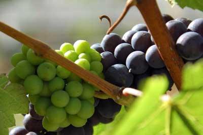 Tecnovino interprofesional vino