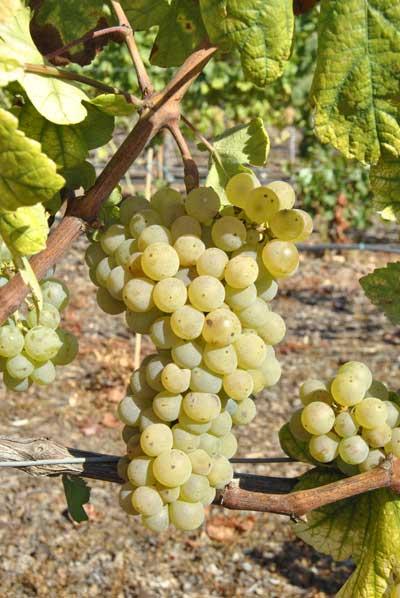Tecnovino patrimonio vinicola catalan Bodegas Torres