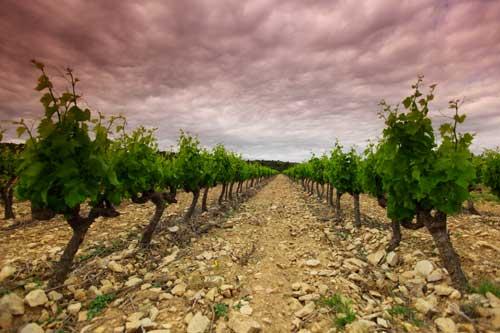 Tecnovino ley sobre el alcohol vino alimento vinedo