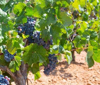 Tecnovino programa nacional del vino modificaciones
