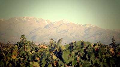 Tecnovino Congreso Mundial de la OIV vinedo Mendoza