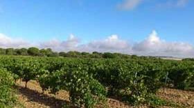 Razones para escaparse a la Ruta del Vino de Rueda