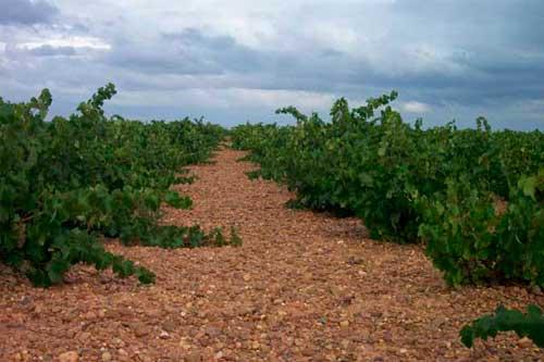 Tecnovino Ruta del Vino de Rueda majuelo vinedo 2