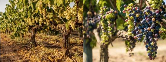 Tecnovino hotel tematico vino Praktik Vinoteca 3