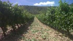 El vino que se sueña con la llegada de la vendimia 2014 en la Ribera del Duero