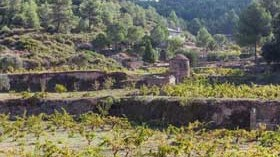 Abadal se vuelca en la recuperación del vino de tina