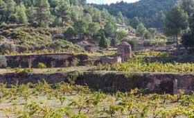 Tecnovino vino de tina Abadal