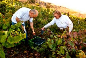 Tecnovino vinos nacionales Grupo Jorge Ordonez vendimia manual