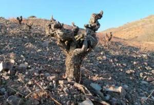 Tecnovino vinos nacionales Grupo Jorge Ordonez vinas viejas Calatayud