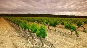 Talleres prácticos de herramientas GIS de apoyo a la gestión vitivinícola
