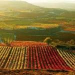 Radiografía del vino en el mundo: producción, viñedo, consumo y comercio