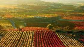 Sube un 2,5% el precio medio del viñedo en 2014