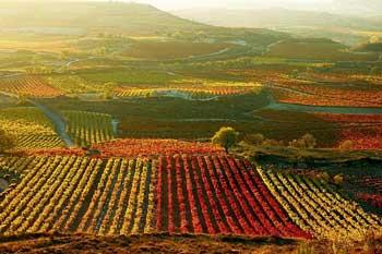 Tecnovino superficie de vinedo en Espana