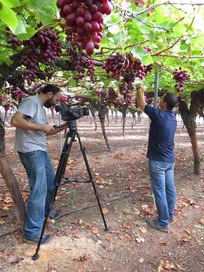 Tecnovino uso sostenible de fitosanitarios Magrama Murcia